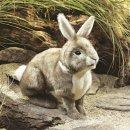 Folkmanis Baumwollschwanz-Kaninchen