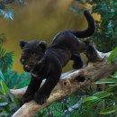 Folkmanis schwarzer Panther